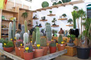 Cactus y Bonsais en Leon_Jardineria Magal
