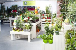 Escaparate de jardineria en Leon_Jardineria Magal
