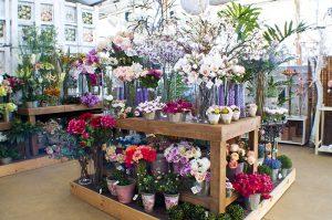Flores y jarrones en Leon_Jardineria Magal