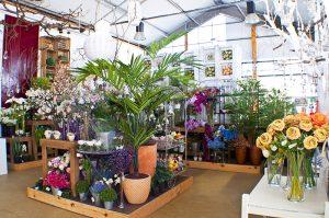 Flores y plantas en Leon_Jardineria Magal