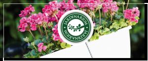 Jardinarium en León - Jardinería Magal
