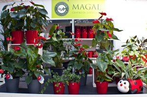 Plantas de temporada en Leon_Jardineria Magal