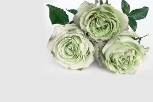 decoración con flores en León - Jardinería Magal