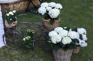 decoración de jardines en León - Jardinería Magal