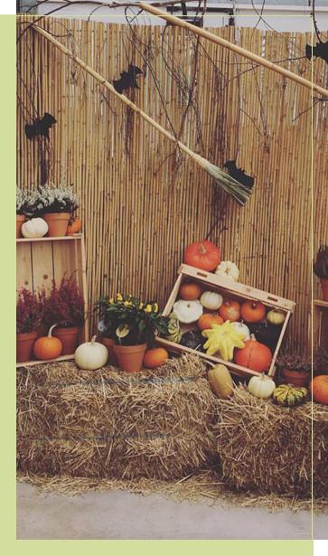 Empresa profesional en la decoraci n floral en le n - Decoracion de jardineria ...