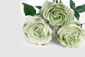 decoración floral en León - Jardinería Magal