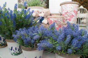 flores de temporada en león - Jardinería Magal