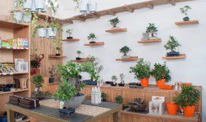 bonsais en León - Jardinería Magal